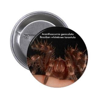 Brazilian whiteknee tarantula badge