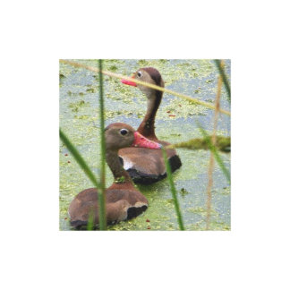Brazos Bend Ducks Print Gallery Wrapped Canvas