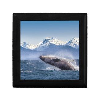 Breaching Humpback Whale In Alaska Gift Box