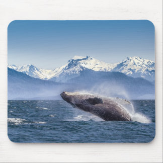 Breaching Humpback Whale In Alaska Mouse Pad