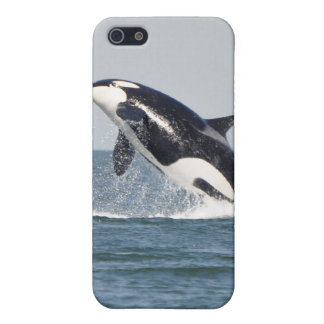Breaching Killer Whale iPhone 4 Case