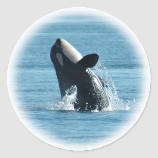 Breaching Orca Stickers