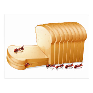 Bread and ants postcard