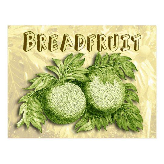 Breadfruit Postcard
