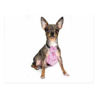 Breast Cancer Awareness Manny the Merle Chihuahua Postcard