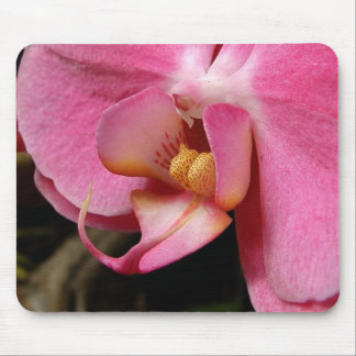 Breathtaking Beauty Mouse Pad