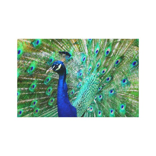 Breathtaking Peacock Picture Canvas Print