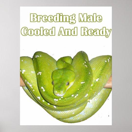 Breeding Male Chondro Poster