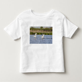 Breeding pair of tundra swans takeoff for toddler T-Shirt