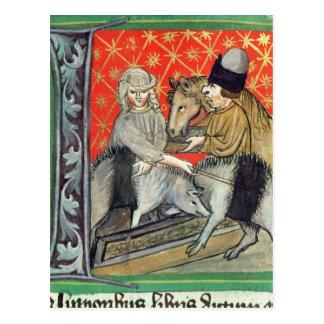 Breeding pigs and horses postcard