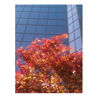 Brentwood Trees and Glass Postcard