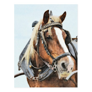 Breton draught horse in harness postcard