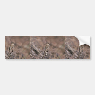 Brewer's sparrow bumper stickers