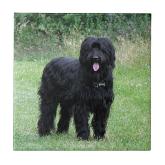 Briard dog beautiful tile or trivet, gift