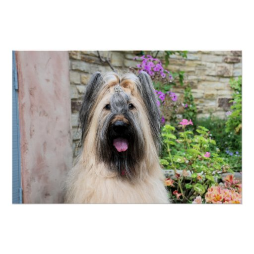 "Briard Dog in a Tiara ""Queen Bee"" Print"
