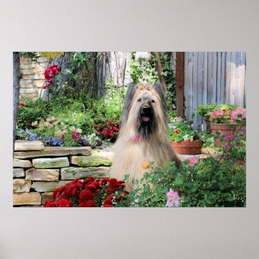 Briard Dog in Flower Garden Poster