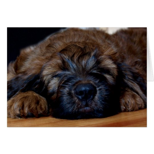 briard puppy card