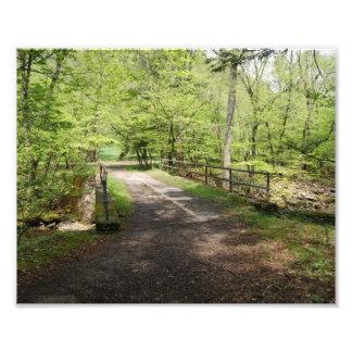 Bridge in the woods 10x8 Photographic Print