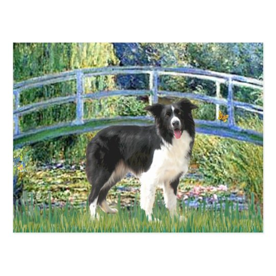 Bridge (Monet)-Border Collie Postcard