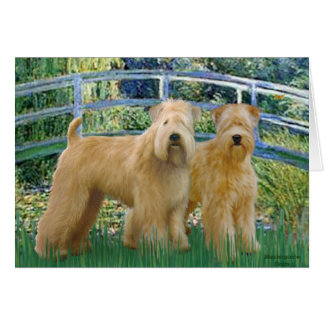 Bridge - Two Wheaten Terriers Card