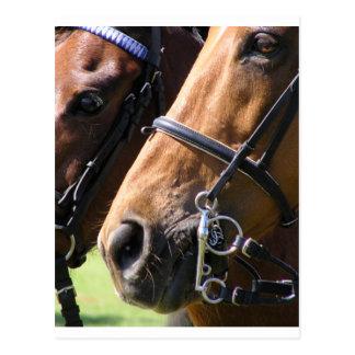 Bridled horses postcard