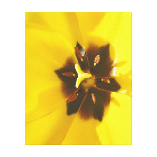 Bright As the Sun Tulip Art Wrapped Canvas Stretched Canvas Print
