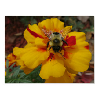 Bright & Beautiful Flower With Bee Poster