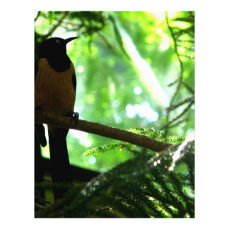 Bright Bird 21.5 Cm X 28 Cm Flyer