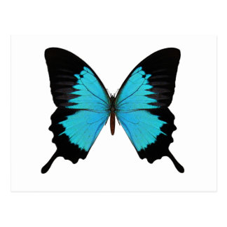 Bright Blue & Black Butterfly Original Colors Postcard