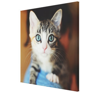 Bright Blue Eyed Kitten Canvas Print
