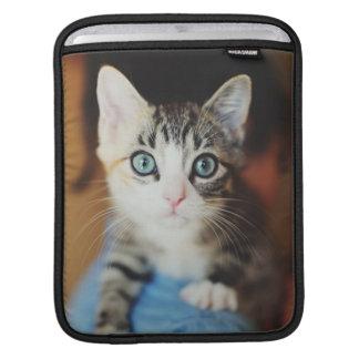 Bright Blue Eyed Kitten iPad Sleeves