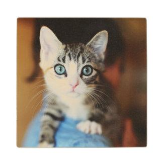 Bright Blue Eyed Kitten Wood Coaster