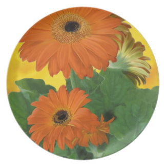 Bright, Bold Gerbera Daisies Plate