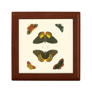 Bright Butterflies by Pieter Cramer Jewelry Boxes