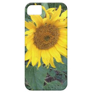 Bright Cheery Yellow Sunflower iPhone 5 Cover