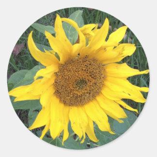Bright Cheery Yellow Sunflower Round Sticker