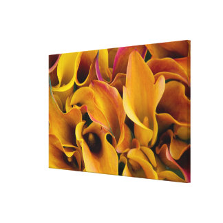 Bright colorful calla lilies at the stretched canvas prints