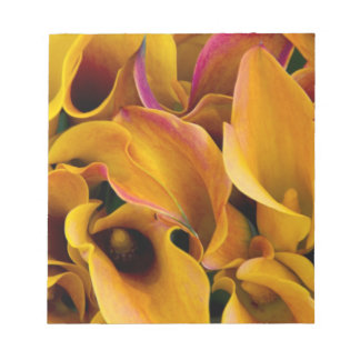 Bright colorful calla lilies at the notepad