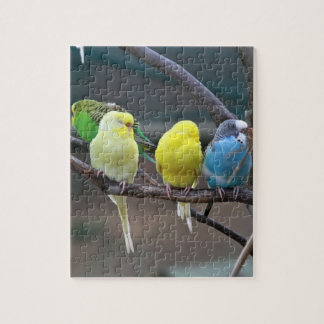 Bright Colorful Parakeets Budgies Parrots Birds Jigsaw Puzzle