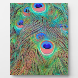Bright Colorful Peacock Feathers Plaque