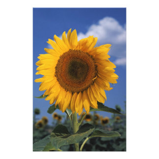Bright colorful sunflower stationery