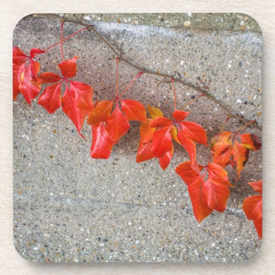 Bright coloured autumn leaves coasters