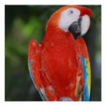 Bright Coloured Parrot Poster
