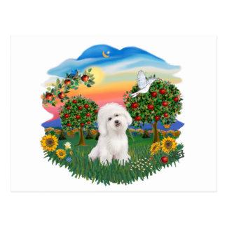 Bright Country - Bichon Frise Postcard