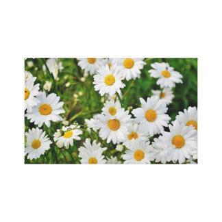 Bright Daisy Canvas