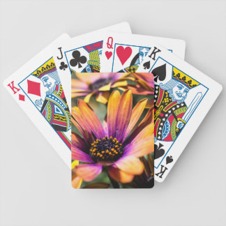 Bright daisy playing cards - add your text!