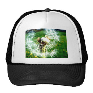Bright Dandelion Clock Cap