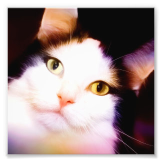 BRIGHT EYED KITTY PRINT ART PHOTO