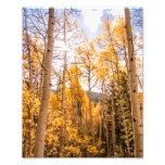 Bright Fall Aspen Leaves
