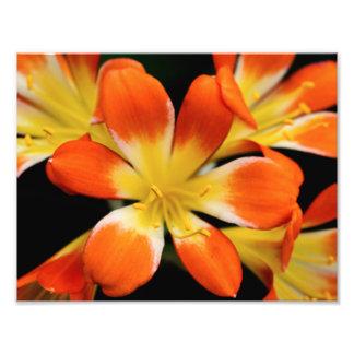 Bright Flowers Photo Print